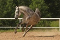 Картинка фон, конь, бег