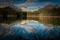 Картинка лес, горы, озеро, отражение, Канада, кусты