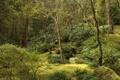 Картинка зелень, деревья, ручей, камни, сад, США, кусты