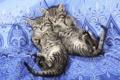 Картинка сон, покрывало, котята