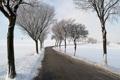 Картинка зима, деревья, дорога