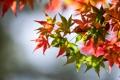 Картинка bokeh, осень, зеленые листья, green leaves, red leaves, боке, листья