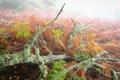 Картинка иней, трава, туман, утро, коряга