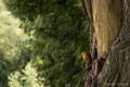 Картинка дерево, птица, кора, Владислав Родионов, Vladislav Rodionov