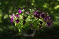 Картинка макро, цветы, вазон