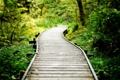 Картинка дорога, зелень, лес, трава, дерево, тропа, дорожка