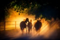 Картинка свет, кони, лошади, табун, солнечный