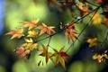Картинка зелень, осень, листья, ветка