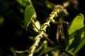 Картинка макро, свет, растение, стебель, боке, bokeh, plant