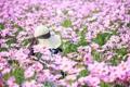 Картинка лето, цветы, шляпка