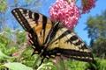Картинка цветок, природа, бабочка, крылья, мотылек