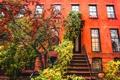 Картинка осень, велосипед, дерево, Нью-Йорк, Бруклин, тротуар, Соединенные Штаты