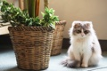 Картинка кошка, цветок, кот, растение, пушистый, кашпо