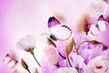Картинка бабочки, цветы, flowers, purple, butterflies