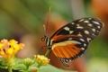 Картинка листья, цветы, бабочка, насекомое, боке