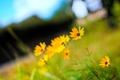 Картинка лето, растения, яркие, природа, цвета, цветы