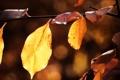 Картинка осень, осенние обои, красивые картинки, макро фотографии, листок, листья, природа