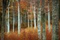 Картинка природа, лес, осень, деревья