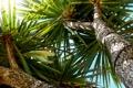 Картинка лето, небо, солнце, свет, природа, пальмы, light