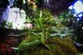 Картинка зелень, листья, дерево, растение, мох, ствол
