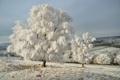 Картинка зима, иней, снег, деревья, природа, дерево