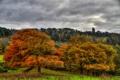 Картинка осень, лес, деревья, пасмурно