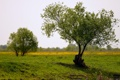 Картинка поле, лето, природа, дерево