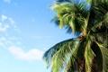 Картинка лето, пальма, summer