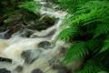 Картинка камни, поток, речка, папоротник