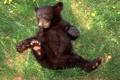 Картинка лес, трава, медведь, медвежонок