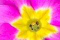 Картинка цветок, макро, краски, лепестки, тычинки