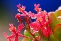 Картинка цветок, вода, капли, лепестки, соцветие