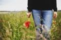Картинка поле, девушка, цветы, маки
