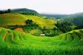 Картинка пейзаж, горы, поля, зеленые, хижина, Вьетнам