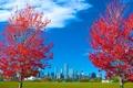Картинка осень, небо, трава, листья, деревья, город, Чикаго