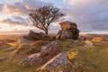 Картинка природа, камни, дерево