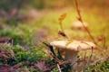 Картинка осень, листья, макро, иголки, гриб