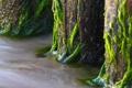 Картинка вода, дерево, мох