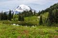 Картинка трава, деревья, цветы, озеро, поляна, гора, снежная