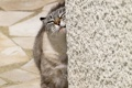 Картинка кот, стена, животное, шерсть, хвост, окрас