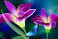 Картинка бабочка, коллаж, мотыдек, лепестки, цветы