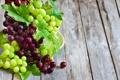 Картинка листья, красный, зеленый, green, виноград, red, leaves