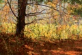 Картинка осень, листья, свет, пейзаж, ветки, дерево, тень