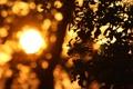 Картинка листья, солнце, лучи, закат