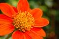 Картинка природа, цветок, обои, лепестки, тычинки
