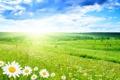 Картинка чистота..., лето, Ромашка, зелень, красивый, вид, прекрасно