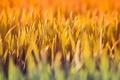 Картинка зелень, трава, свежесть, растения, травка, травинка, травинки