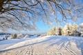 Картинка зима, лес, снег, ветки, дерево