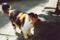Картинка кот, кошак, полосатый, котяра