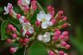 Картинка цветок, макро, Burning Bush